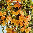 Draped in Orange by Leslie  Hagen