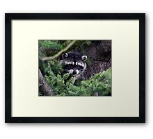 Lil Kim  The Racoon In My Yard Framed Print