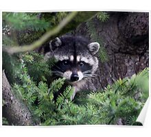 Lil Kim  The Racoon In My Yard Poster