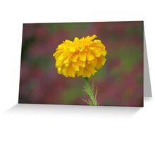 The Marigold Greeting Card