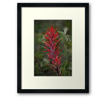 Wyoming Paintbrush Framed Print