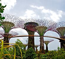 The Supertrees of Singapore by tpixx