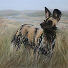 African Wild Dog by Tom Godfrey