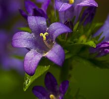 Bright Purple Wildflowers by BLaskowsky