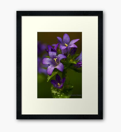 Bright Purple Wildflowers Framed Print