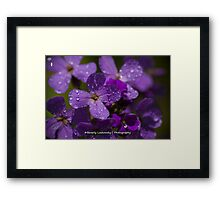 Purple Wildflowers after the Rain Framed Print