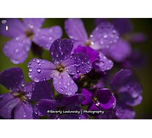 Purple Wildflowers after the Rain Photographic Print