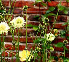 Flowers 2 by Kenart