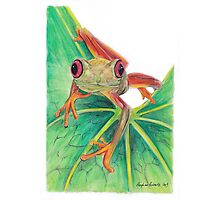 Red-Eye Green Tree Frog Photographic Print