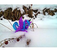 Unicorn.  Photographic Print