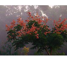 """Golden Rain Tree"" Photographic Print"