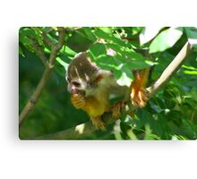 Squirrel monkey.......... Canvas Print