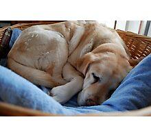 Fast Asleep Photographic Print