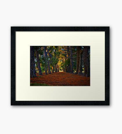 """""""A Walk in the Park"""" Framed Print"""