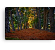 """A Walk in the Park"" Canvas Print"