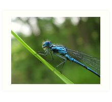 5 Legged Blue Dragon! Art Print