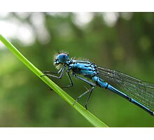 5 Legged Blue Dragon! Photographic Print