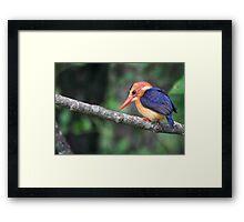 Malachite Kingfisher Framed Print