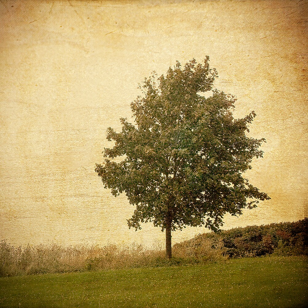 Autumn Breeze by sandra arduini