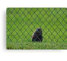 Let me out Mate Canvas Print