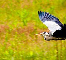 The Heron hasn't landed by omusremit