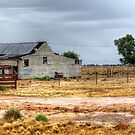 Shearing Shed on the Conargo Road by Jennifer Craker