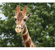 Mrs. Giraffe Photographic Print