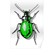Green Beetle Poster