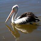 pelican #1 by GrowingWild