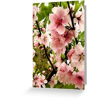 Bright pink peach blossoms of spring Greeting Card