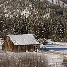 Cold Montana Morning by Ken Fortie