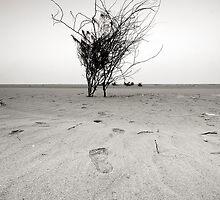Lost by Khaled Kashkari