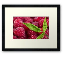 SALE!!! Raspberry! Framed Print