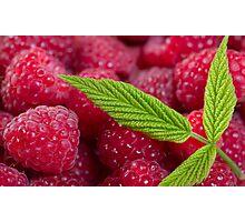 SALE!!! Raspberry! Photographic Print