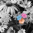 flowers by Areej27Jaafar