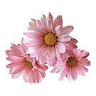 Three Pink Daisies by Susan Savad
