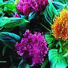 Celosia 2 by jpryce