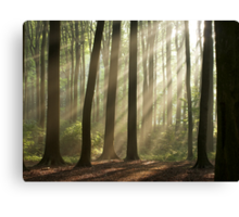 Sun rays in morning forest Canvas Print