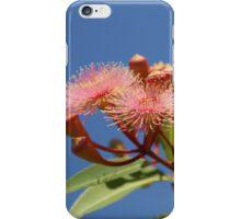 Australian Gum Nuts iPhone Case/Skin