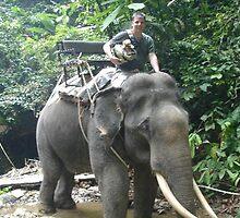 Elephant ride at Phuket, Thailand by chord0