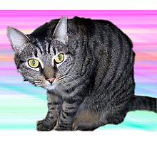 Mocha the Cat Photographic Print