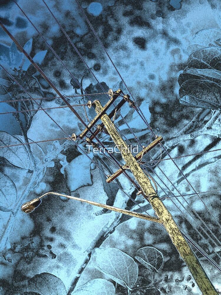 Evolution: The modern tree by TerraChild