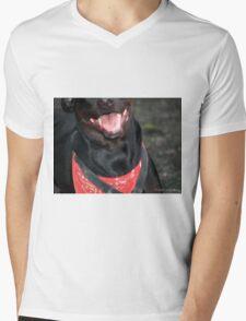Black Lab  Mens V-Neck T-Shirt