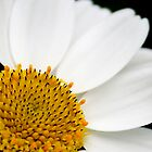 PURE DAISY by stefan