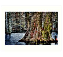 Big Cypress Art Print