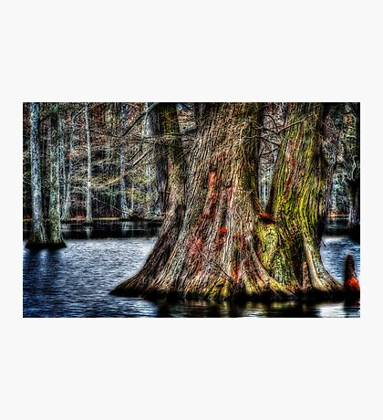 Big Cypress Photographic Print