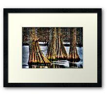 Cypress Quad Framed Print