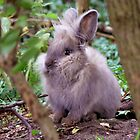 Lion head rabbit by AngelaFoster