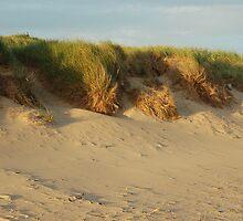 Dune by Els Steutel