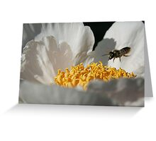 In Coming Bee Greeting Card